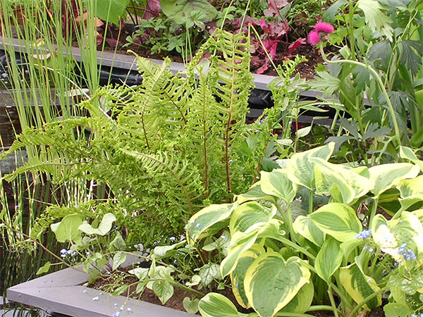 _0004_plants
